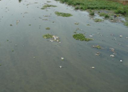 water pollution in hyderabad