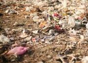 Manure from municipal waste