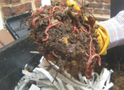 Commercial production of vermicompost