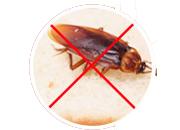 Pest control mamagement
