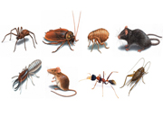 Noida moves against pests