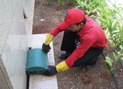 Pest Management In commercial establishments