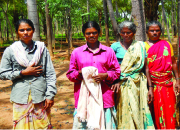Women help run India's first energy plantation