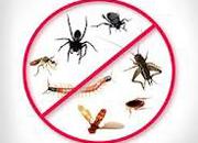 Rentokil acquires pest companies in UAE