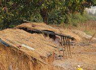 Mangrove Mortality,a rising concern