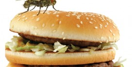 Curbing infestation in food areas