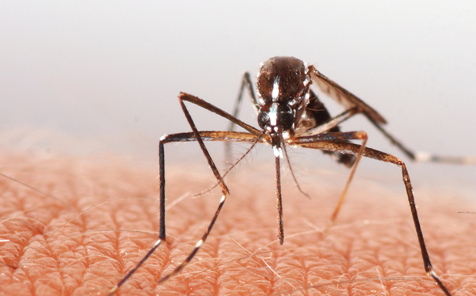 Malaria mosquitoes becoming insecticide-resistant