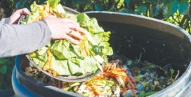 New food waste disposal technology