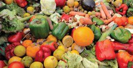 Reducing & transforming organic food waste