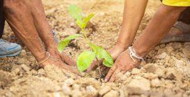 Teamwork for a tree plantation drive