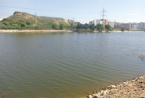 Case Study: Successful Rejuvenation of a Bengaluru lake